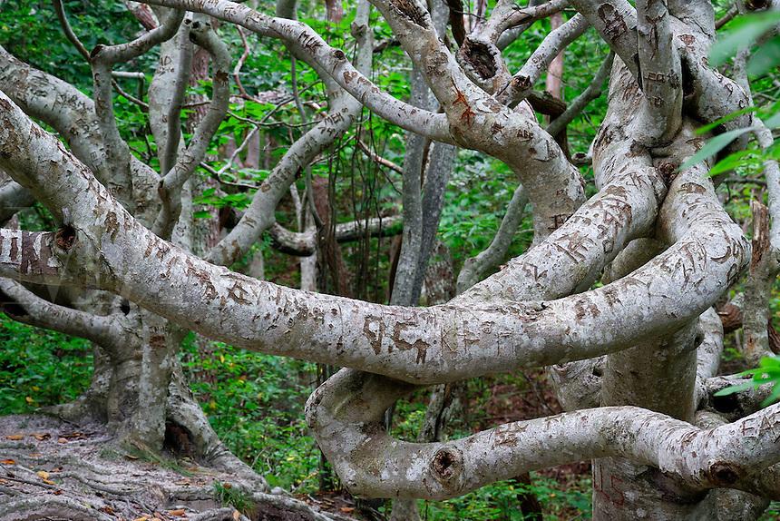 Cedar Tree Neck Sanctuary, Martha's Vineyard, Massachusetts, USA