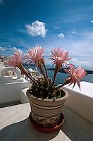 Blumentopf auf Terrasse  in Fira, Insel Santorin (Santorini), Griechenland, Europa