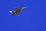 U.S Jet fighter<br /> (13)