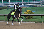 May 1, 2014: Commanding Curve gallops in preparation for the Kentucky Derby at Churchill Downs in Louisville, KY. Zoe Metz/ESW/CSM