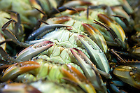 Softshell Blue Crabs on their backs