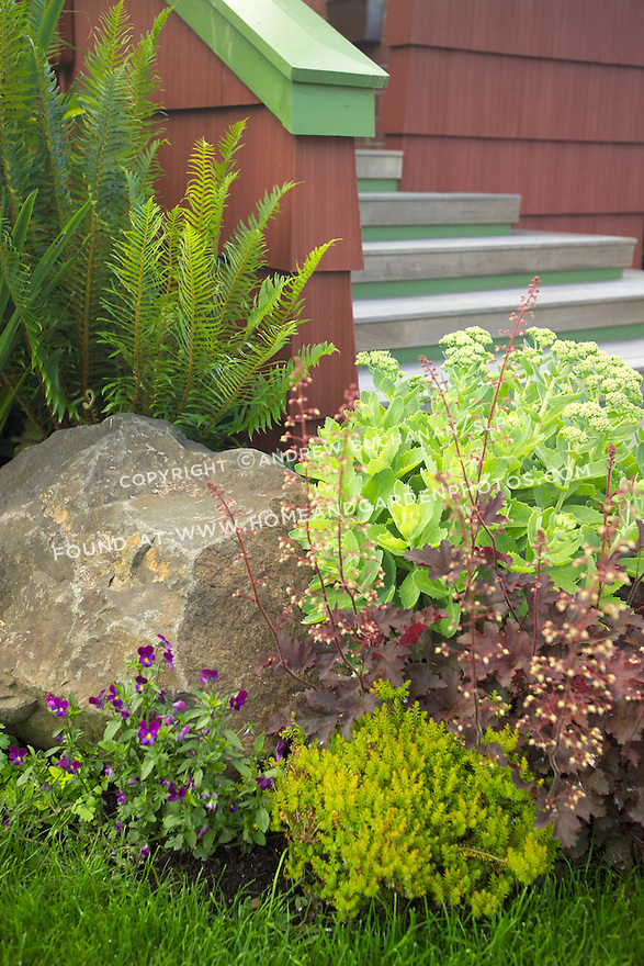 Garden vignette of creative annual and perennial plant combinations in an organic garden in Seattle.  The owner, an artist and garden designer, has matched house and garden colors to tie the spaces together.