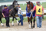 September 1, 2014: Cary Street (#4, right) and Ever Rider (#2) enter the paddock for the grade 3 Greenwood Cup at Parx Racing in Bensalem, PA. ©Joan Fairman Kanes/ESW/CSM