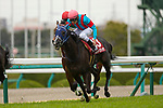 TAKARAZUKA,JAPAN-MAR 07: Maltese Diosa #13,ridden by Hironobu Tanabe,wins the Tulip Sho at Hanshin Racecourse on March 7,2020 in Takarazuka,Hyogo,Japan. Kaz Ishida/Eclipse Sportswire/CSM