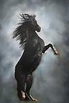 Western Horses - fine art images