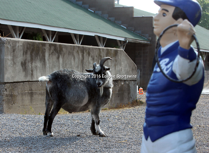 LOUISVILLE, KY - APRIL 25: A goat and a lawn jockey on the backstretch of Churchill Downs, Louisville KY. (Photo by Mary M. Meek/Eclipse Sportswire/Getty Images)