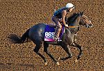 October 27, 2014:  Sunset Glow, trained by Wesley Ward, exercises in preparation for the Breeders' Cup Juvenile Fillies Turf at Santa Anita Race Course in Arcadia, California on October 27, 2014. John Voorhees/ESW/CSM