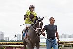 Vinceremos and jockey Edgar Prado after winning a 1 mile maiden allowance race at Gulfstream Park. Hallandale Beach, Florida 01-04-2014