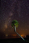 The Milky Way glows around a palm tree at Shell Point Beach in Wakulla County, Florida along the Forgotten Coast of the Florida panhandle.<br /> ©2013 Mark Wallheiser