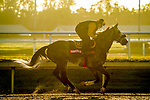 January 20, 2021: Sleepy Eyes Todd exercises as horses prepare for the 2021 Pegasus World Cup Invitational at Gulfstream Park in Hallandale Beach, Florida. Scott Serio/Eclipse Sportswire/CSM