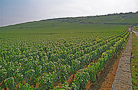 View over the La Grande Rue Grand Cru vineyard (Domaine Francois Lamarche), Vosne Romanee, Bourgogne