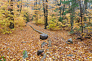 Leaf drop along the Mount Osceola Trail in Livermore, New Hampshire on a rainy autumn day.