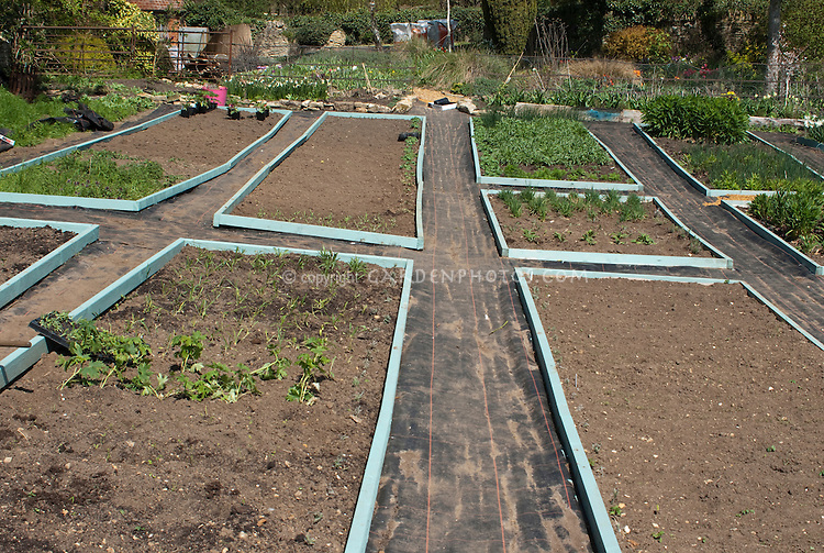 New flower garden for cutting, with raised beds of good brown dirt soil, pathways