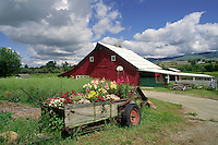 RED BARN and FLOWERS -  OREGON FARM