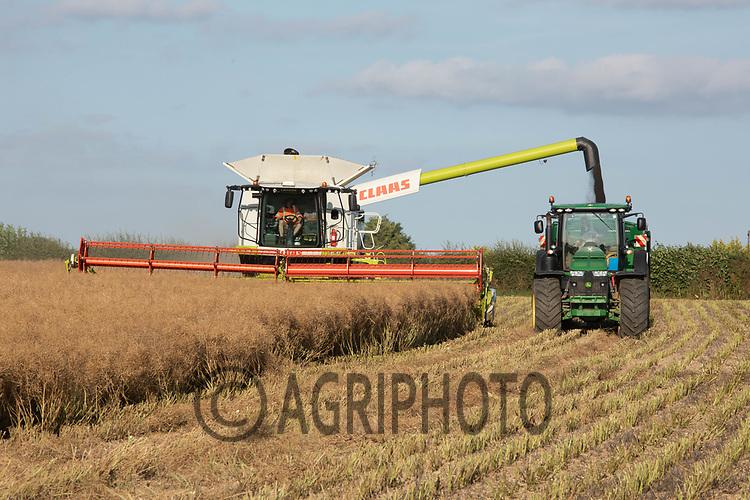 Harvesting oilseed rape in Rutland<br /> ©Tim Scrivener Photographer 07850 303986<br />      ....Covering Agriculture In The UK....