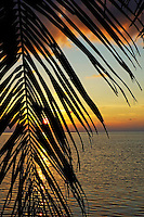 Sun setting over the sea seen through a silhouetted coconut palm frond, Maldives.