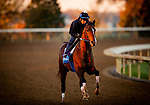 October 31, 2020: Jackie's Warrior, trained by trainer Steven M. Asmussen, exercises in preparation for the Breeders' Cup Juvenile at at Keeneland Racetrack in Lexington, Kentucky on October 31, 2020. Alex Evers/Eclipse Sportswire/Breeders Cup
