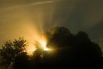 Godlight in the Coloma Valley, California.