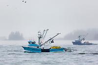Commercial fishing fleet for Pacific Herring in Sitka, Alaska.