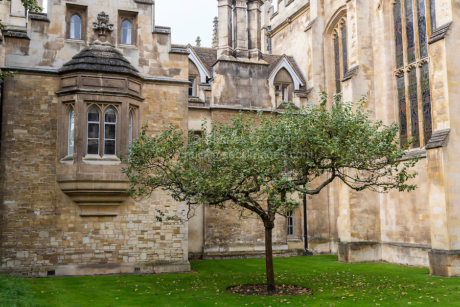 UK, England, Cambridge.  Window to Sir Isaac Newton's Lodgings, Trinity College.  The tree is purported to be from a cutting of the tree under which Newton sat when an apple fell on his head.