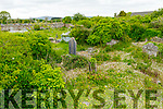 The overgrown condition of Rath graveyard on Saturday