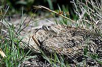 Rattlesnake, Texas Panhandle roadside park