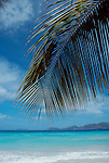 British Virgin Islands, Tortola looking at Jost Vandyke, Palm tree frond, white beaches, Greater Antilles, West Indies, Caribbean Sea, Central America,