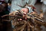 """A man clutches a handfull of Neem sticks in Islamabad. In South Asia, the tree is variously known as """"Divine Tree,"""" """"Heal All,"""" """"Nature's Drugstore,"""" """"Village Pharmacy"""" and """"Panacea for all diseases."""" Products made from neem have proven medicinal properties, being anthelmintic, antifungal, antidiabetic, antibacterial, antiviral, anti-fertility, and sedative. It is considered a major component in Ayurvedic medicine and is particularly prescribed for skin disease. They are also frequently used as toothbrushes."""