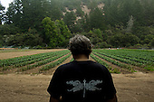 Waddell Creek, California<br /> July 26, 2014<br /> <br /> Route One Farm harvest at Waddell Creek. The farm is owned and run by farmer Jeff Larkey.