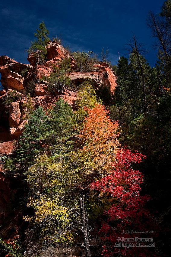 Canyon Wall, West Fork of Oak Creek, Arizona