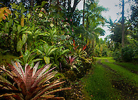 Exotic Garden Entryway in Hawaii including exotic plants, amazing tropical scenery, garden vignettes, exotic plants and flowers, unusual plant combinations and exciting arrangments.
