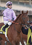 6 March 2010: Awesome Act and jockey Julien Leparoux go to the post for The Gotham at Aqueduct Racetrack in Ozone Park NY.