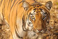 India - Wildlife & Landscapes