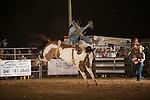 SEBRA - Gordonsville, VA - 8.9.2014 - Bronc Riding