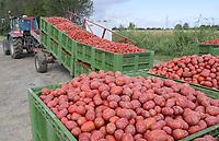 ITALY, Parma, tomato canning company Mutti s.p.a., founded 1899, fresh havested plum tomatoes are processed and conserved as passata direct on the field at the Mutti Insta factory, a mobile conserving unit / ITALIEN, Parma, Basilicanova,Tomatenkonservenhersteller Firma Mutti spa, die frisch geernteten Flaschentomaten werden direkt auf dem Feld in der Insta Factory, einer mobilen Konservierungsanlage, zu Passata verarbeitet, Anlieferung der frisch geernteten Tomaten durch Marco Franzoni, Farmer in Santa Vittoria