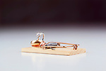 Mouse trap(s).  Generic mouse traps in clean cut, white background with wedding rings for bait.