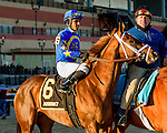 NEW YORK, NY - FEB 04: Fillet of Sole in post parade for the Withers Stakes on Withers Stakes Day at Aqueduct Racetrack on February 4, 2017 in the Ozone Park neighborhood of New York, New York. (Photo by Sue Kawczynski/Eclipse Sportswire/Getty Images)