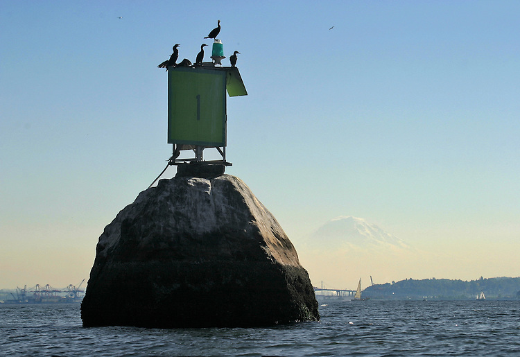Seattle, Elliott Bay, Four-Mile Rock, a glacial erratic, today hosts a navigation aid and fish seeking cormorants, It is named for its distance from the Port of Seattle, but is also part of the Salish Native legends, A great boulder, LUHP-luhp'l or tchk'LEHT-lah ('boulder'), Puget Sound, Salish Sea, Washington State, Pacific Northwest, United States,