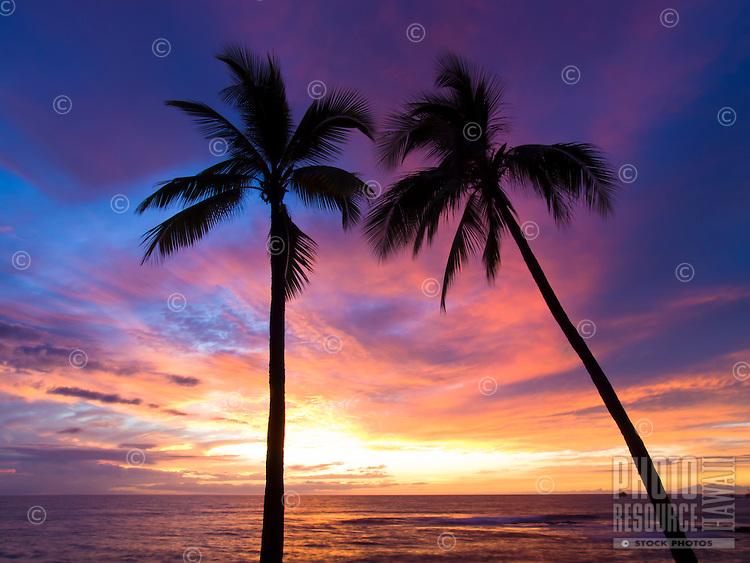 Two palm trees silhouetted against a brilliant sunset, Honi's Beach, Kailua-Kona, Big Island.