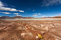 Red volcanic stones, lagoon, and yellow coiron grass of the Salar de Aguas Calliente with Láscar Volcano under a blue sky, San Pedro de Atacama Chile