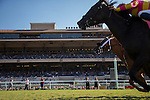 DEL MAR,CA-SEPTEMBER 04: Avenge (this side), ridden by Fravien Prat,wins the John C. Mabee Stakes at Del Mar Race Track on September 04,2016 in Del Mar,California (Photo by Kaz Ishida/Eclipse Sportswire/Getty Images)