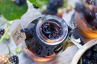 Brombeer-Balsamico, Brombeer-Essig, Brombeerbalsamico, Brombeeressig, Brombeeren werden in Balsamico, Essig, Balsamico-Essig, Balsamessig eingelegt, Brombeere, Brombeeren, Beeren, Früchte, Frucht, Echte Brombeere, Rubus fruticosus agg., Rubus sectio Rubus, Rubus fruticosus, blackberry, bramble, fruit, Balsamic vinegar, aceto balsamico, balsamic, ronce