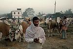 A cattle owner with his cattles at Sonepur fair ground. Bihar, India, Arindam Mukherjee