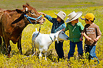 Cash pets the cow while the goat nibbles on Ethan's shirt and Peyton. At the ranch in San Luis Obispo, California