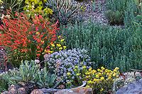 David Salman New Mexico xeric rock garden with Rock Wormwood (Artemisia rupestris) on right with Penstemon pinnifolius and Turkish Stonecress.
