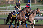 OCT 27 2014:Footbridge, trained by Eoin Harty, exercises in preparation for the Breeders' Cup Classic at Santa Anita Race Course in Arcadia, California on October 27, 2014. Kazushi Ishida/ESW/CSM