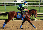 May 08, 2015  American Pharoah returned to galloping at Churchill Downs following his win in the 2015 Kentucky Derby.  He was ridden by his exercise rider Georgie Alvarez.  He is pointed toward the Preakness Stakes at Pimlico on May 16. Owner Zayat Stables, trainer Bob Baffert. By Pioneerof The Nile x Littleprincessemma (Yankee Gentleman.) ©Mary M. Meek/ESW/CSM