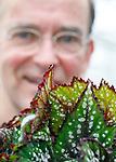 """Foto: VidiPhoto<br /> <br /> LENT – Een duizelingwekkende schakering van kleuren en aan soorten, met de meest wonderlijke bladvormen. Dat is kort samengevat de eerste indruk van een bezoek aan Kwekerij Hoefnagels in Lent onder de rook van Nijmegen. De laatste kweker van Lent, ooit het potplantencentrum van Midden-Nederland, moet eveneens wijken voor de uitbreidingsplannen Nijmegen. Tot die tijd veredelt, vermeerdert en kweekt eigenaar Antoon Hoefnagels de meest exclusieve bladbegonia's van ons land. De hele wereld is hij rondgereisd om het mooiste materiaal te verzamelen en op 1 ha. glas gepassioneerd op te kweken tot soorten waar hij het patent op heeft. Wereldwijde belangstelling is er voor het unieke materiaal, zowel voor de potplant als het stekmateriaal. En het heeft flinke groeipotentie, is de overtuiging van de Lentse kweker, ondanks dat het in de markt tot nog toe maar een klein segment vormt. Opmerkelijk is ook het wereldwijde netwerk van liefhebbers. Hoefnagels: """"Over begonia's raken mensen nooit uitgepraat."""""""