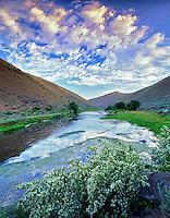 Powder River with Mock Orange bush. Oregon.