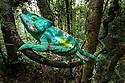 Madagascar Highlights